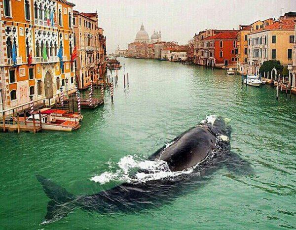 ونیز شهر رویایی جزیره ایتالیایی