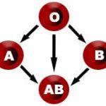 افراد موفق چه گروه خونی ای دارند؟